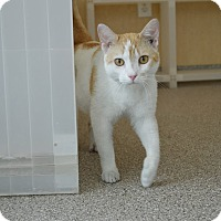 Adopt A Pet :: Willis - Prince George, VA