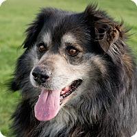 Adopt A Pet :: Nanook - Westfield, NY