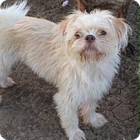 Adopt A Pet :: Martin - McKinney, TX