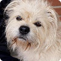 Adopt A Pet :: Raven - Carrollton, TX