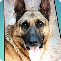 Adopt A Pet :: COSMO VON CONRAD - Los Angeles, CA