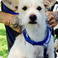 Adopt A Pet :: Clifford - El Cajon, CA