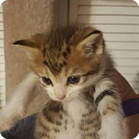 Adopt A Pet :: Bently - Orlando, FL