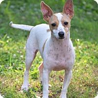Adopt A Pet :: Esther - Bedminster, NJ
