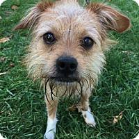 Adopt A Pet :: Cooper - Binghamton, NY