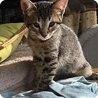 Adopt A Pet :: Ku - Oxnard, CA