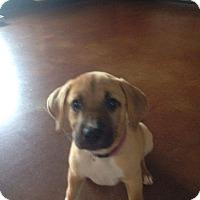 Adopt A Pet :: McKinley - Jacksonville, TX