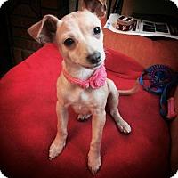 Adopt A Pet :: Fiona D3388 - Shakopee, MN