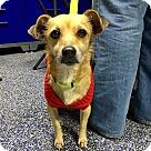 Adopt A Pet :: Missy