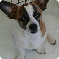 Adopt A Pet :: Sport - Okeechobee, FL