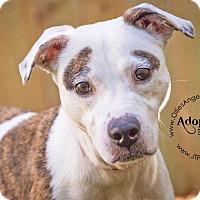 Adopt A Pet :: Lola - GREENLAWN, NY