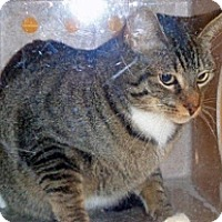 Adopt A Pet :: Tiger Lily - Wildomar, CA