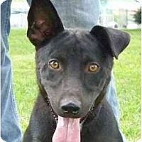 Adopt A Pet :: Dixon - Lexington, MO