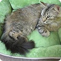 Adopt A Pet :: Petula aka Toula - Mobile, AL