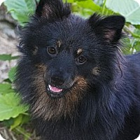 Adopt A Pet :: Bear - North Palm Beach, FL