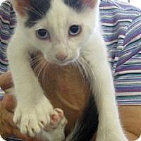 Adopt A Pet :: BigFoot - Dallas, TX