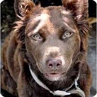 Adopt A Pet :: Tawny - Los Angeles, CA