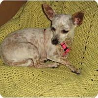 Adopt A Pet :: Miss Freckles - Scottsdale, AZ