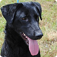 Adopt A Pet :: Toby - Cumming, GA