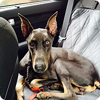 Adopt A Pet :: Duke - New Richmond, OH