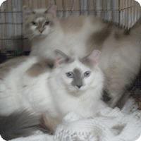 Adopt A Pet :: Glenda - Cocoa, FL