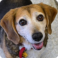 Adopt A Pet :: Nova - Independence, MO