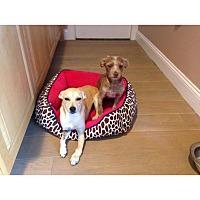 Adopt A Pet :: Gina - selden, NY