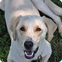 Adopt A Pet :: Goldie - Fayetteville, GA