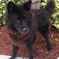 Adopt A Pet :: Luke - Ocean Ridge, FL