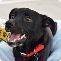 Adopt A Pet :: Harley - Matthews, NC