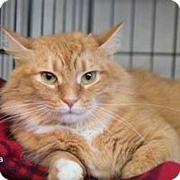 Adopt A Pet :: Amelia - Merrifield, VA