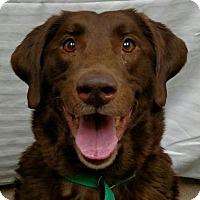 Adopt A Pet :: Farley - Buckeystown, MD