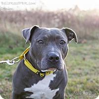 Adopt A Pet :: Denim - Southampton, PA