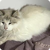 Adopt A Pet :: Clark - Ennis, TX