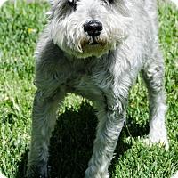 Adopt A Pet :: Kennedy - Sheridan, OR