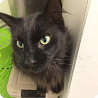 Adopt A Pet :: Flannery - Byron Center, MI