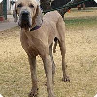 Adopt A Pet :: Noah - Goodyear, AZ