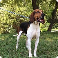 Adopt A Pet :: Admiral - Atchison, KS