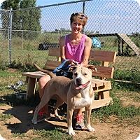 Adopt A Pet :: Teagan - Elyria, OH
