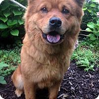 Adopt A Pet :: Fuzzy - Fennville, MI