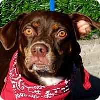 Adopt A Pet :: Dallas - Ridgefield, CT