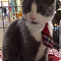 Adopt A Pet :: Archie - Greensburg, PA