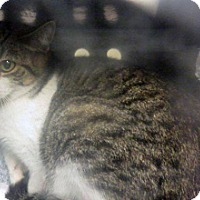 Adopt A Pet :: Lulu - Wildomar, CA