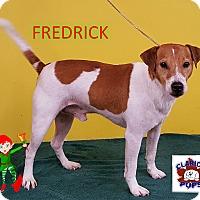 Adopt A Pet :: FREDRICK - Strattanville, PA