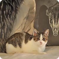 Adopt A Pet :: Ellie - Savannah, GA