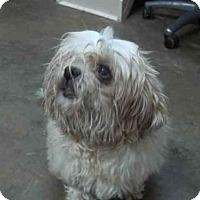 Adopt A Pet :: LINETTE - Fort Walton Beach, FL