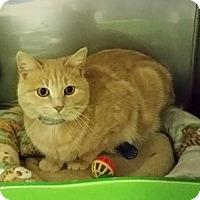 Adopt A Pet :: Andre - Byron Center, MI