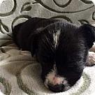 Adopt A Pet :: Seven Dwarfs Sleepy