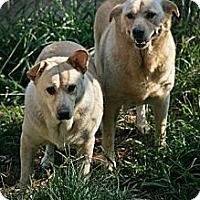 Adopt A Pet :: Thelma & Louise - Jackson, MS