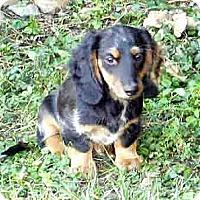 Adopt A Pet :: Moby - San Jose, CA